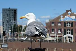Zeeland wint peiling over decentrale ov-tarieven